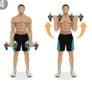 bicepscurl med hantlar