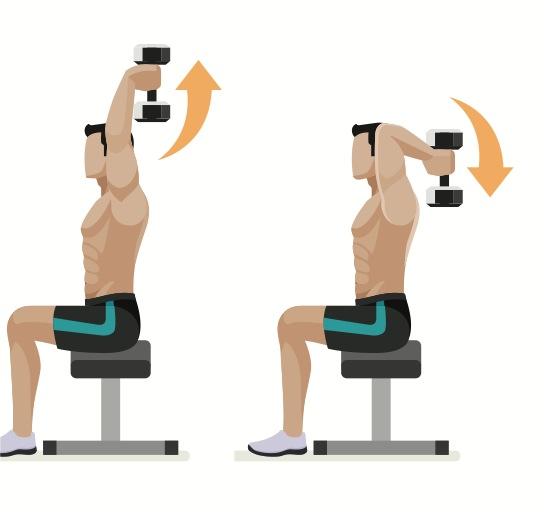 sittande tricepspress - när du vill ha stora och muskulösa armar 387cc1b300599
