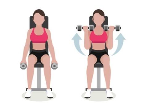 Bicepscurl sittande